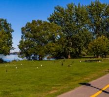 Parc de la Merci, au bord de la Rivière-des-Prairies